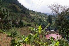 Green field near mount meru. Farming fields near arusha in tanzania on the slopes of mount meru Royalty Free Stock Image