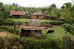 Farming fields in africa. Farming fields near arusha in tanzania, woman digging earth Stock Photography