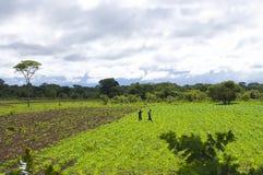 Farming Fields - Zambia Royalty Free Stock Photography