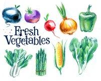 Farming. fresh vegetables on white background Stock Image