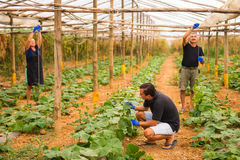 Farming, gardening, agriculture and people concept - Family business. Family Working Together In Greenhouse. Farming, gardening, agriculture and people concept Stock Photos