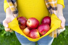 Farming, gardening, harvesting, fall and people concept - woman with apples at autumn garden Stock Photos