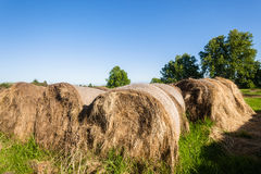 Farming Grass Bales Cattle Feed Stock Images