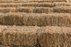 Farming Grass Bales Royalty Free Stock Photography