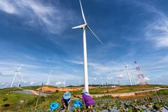 The farming group working strawberry field and Wind turbines stock photo