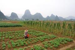 Farming. Hard farming, the farmers' life and survival Stock Image