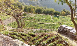 Farming in Himalayas Royalty Free Stock Images