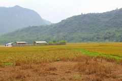 Farming houses harvest rice fields agribusiness, Mai Chau, Vietnam royalty free stock photos