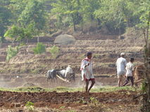 Farming in india Stock Photography