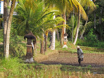 Farming on Indonesia Royalty Free Stock Images