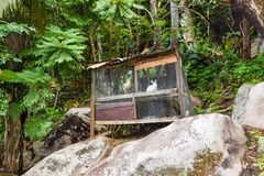 Farming in the Jungles in Seychelles. Little cage with rabbit and chickens is standing in the middle of the jungle Stock Image