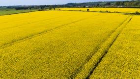 farming Koolzaad, Canola, Biodieselgewas ierland royalty-vrije stock afbeelding