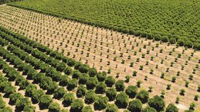 farming Landbouw de landbouwland het groeien fruit en plantaardig c royalty-vrije stock foto's