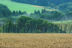 Farming landscape Royalty Free Stock Photo