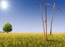 Farming Landscape Stock Image