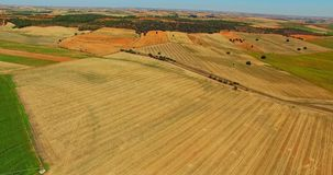 Farming landscape from air. View from air on farming lanscape. Orange and green crops field stock footage