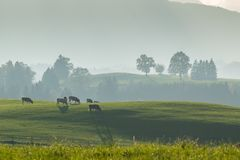 Farming landscape with cows Stock Photography