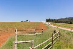 Farming Landscape. Dirt road vehicle alongside crops of maize corn planted in summer field landscape Royalty Free Stock Image