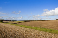 Farming landscape Royalty Free Stock Images
