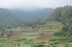 Farming at Mountain Stock Photography