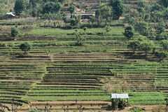 Farming in Nepal Royalty Free Stock Photography