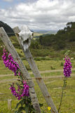 Farming in NZ - Sheep Skull. Sheep skull alongside flowers in New Zealand. Coromandel Stock Image