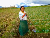 Farming in Otavalo, Ecuador Royalty Free Stock Photo