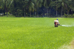 Farming at the paddy field Royalty Free Stock Images