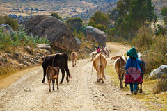 Farming In Peru, South America. Royalty Free Stock Photography