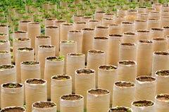 Farming and plantation Royalty Free Stock Photography