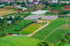 Farming plots of land, mountain Vietnam Stock Images