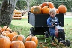 Farming Pumpkins Royalty Free Stock Images