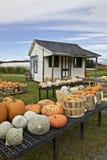 Farming, pumpkins display Royalty Free Stock Images