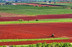 Farming red earth Stock Image