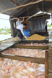 Farming of red tilapia in cage on river in the mekong delta of Vietnam Stock Photos