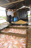 Farming of red tilapia in cage on river in the mekong delta of Vietnam Royalty Free Stock Photo