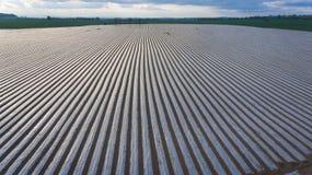 farming Rijen van het met mulch bedekken van plastic bladen ierland royalty-vrije stock foto's