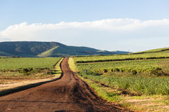Farming Road Landscape Royalty Free Stock Photos