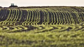 Farming Rows seeds plalnted. Farming Rows seeds planted Canada Stock Image