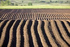 Farming Rows seeds plalnted. Farming Rows seeds planted Canada irrigation sprinklers Stock Image