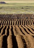 Farming Rows seeds plalnted. Farming Rows seeds planted Canada irrigation sprinklers Stock Photo