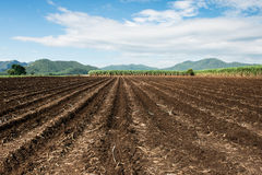Farming Rows seeds plalnted Royalty Free Stock Photography