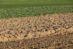 Farming Stock Photography