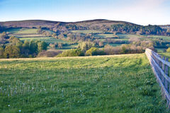Farming in somerset wildflowers. Quantock hills of somerset depicting a typical mixed farming area with post and rail fence Stock Photo
