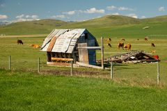 Farming in summer time in Alberta in Canada. Farming in summer time in foothills of Alberta in Canada stock photos