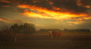 Farming at sunset Stock Image