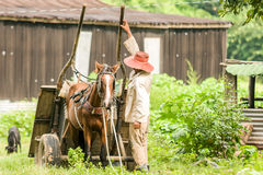Farming Tabacco. Taken in pinar del rio Cuba. Man standing with hees horse carrige Royalty Free Stock Photo