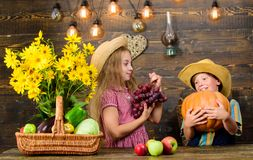 Farming teaches kids where their food comes from. Siblings having fun. Family farm. Farm market. Children presenting. Farm harvest wooden background. Kids stock image