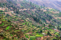 Farming Terraces in Peru. Lush green farming terraces in Tarma, Peru Royalty Free Stock Photo