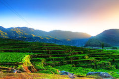 Farming terraces Stock Photo